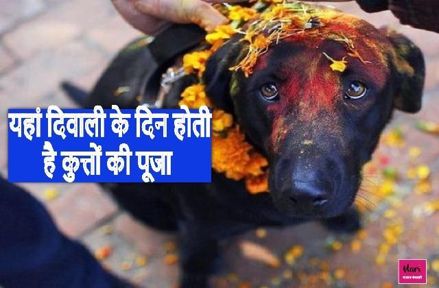 अनोखी दिवाली! यहां कुत्तों की होती है पूजा, अलग अंदाज में लोग मनाते हैं त्योहार
