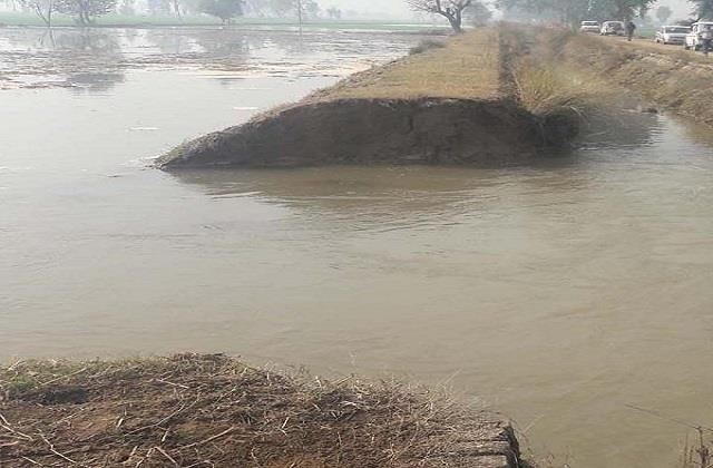 hundreds of acres of paddy crop inundated due to rupture of rajbaha