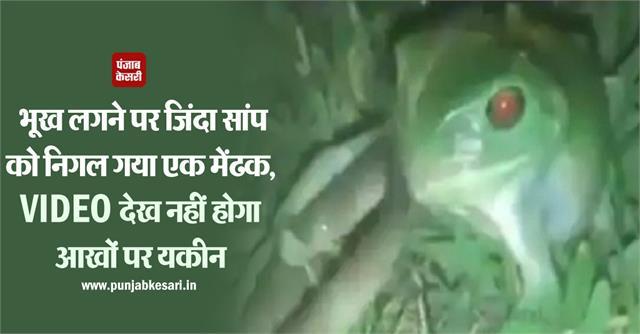 national news social media frog sushant nanda snake