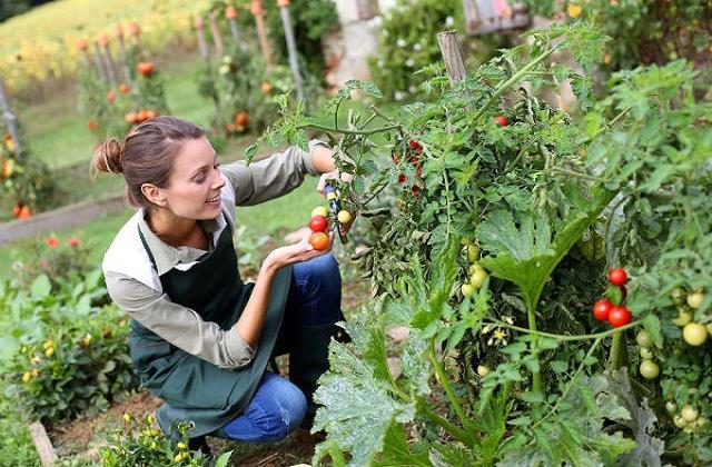 Kitchen Garden: आर्गेनिक सब्जियां खुद उगाएं, सर्दियों में उगने वाली वेजीटेबल लिस्ट