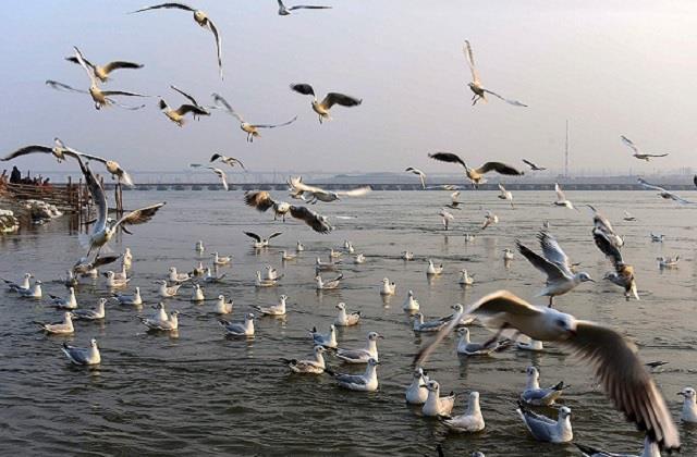 the confluence of siberian birds the sangam beach