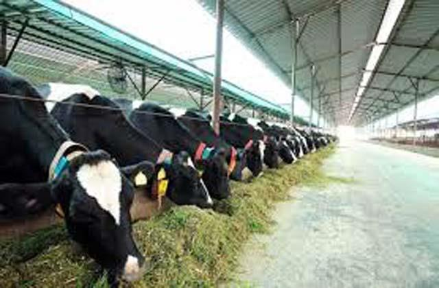 j k dairy farmers earn 30 thousand crores in three months