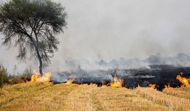 incidents of stubble burning increased by 49 over last year