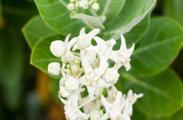 वास्तु टिप्स: घर पर लगाएं ये पौधे, कभी नहीं होगी धन की कमी