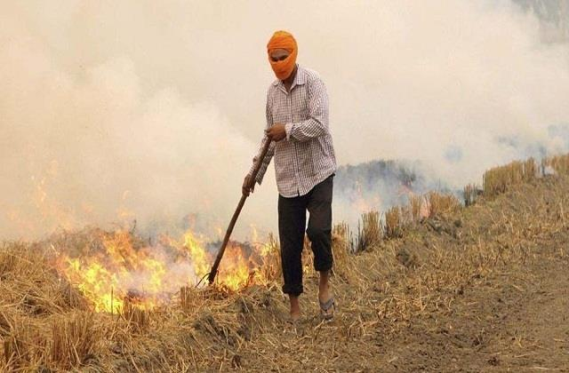punjab farmers burn most stubble in opposition to agricultural laws