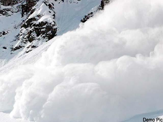 sheep goats buried in avalanche
