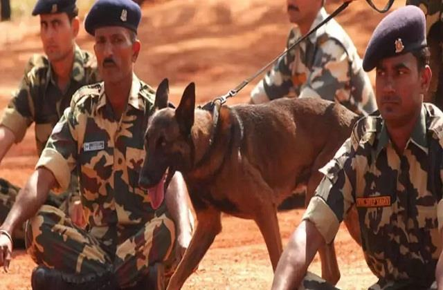 itbp to name its dog squad