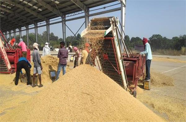 central government taken paddy purchase on msp