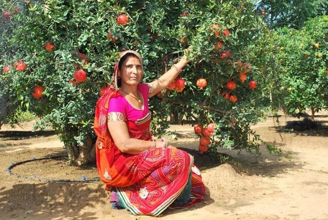 5वीं पास है खेती की 'मास्टरनी' संतोष देवी, सिंदूरी अनार से कर रही लाखों की  कमाई - women-farmer-santosh-devi-khedar-beri-inspiring-story - Nari Punjab  Kesari