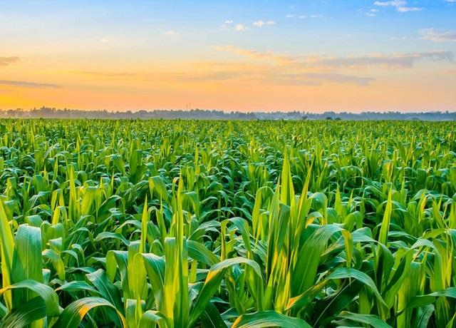 punjab will get 4713 crores for agricultural structure