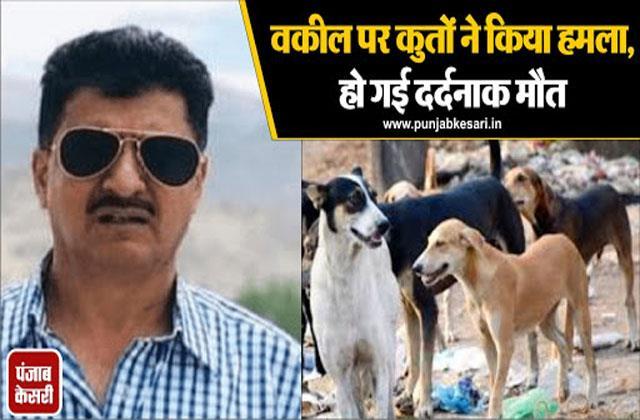 lawyer died in dog attack in kashmir