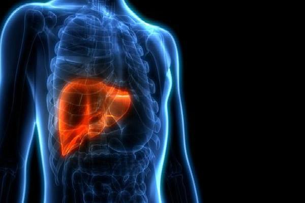 liver can be kept alive out of the body for a week