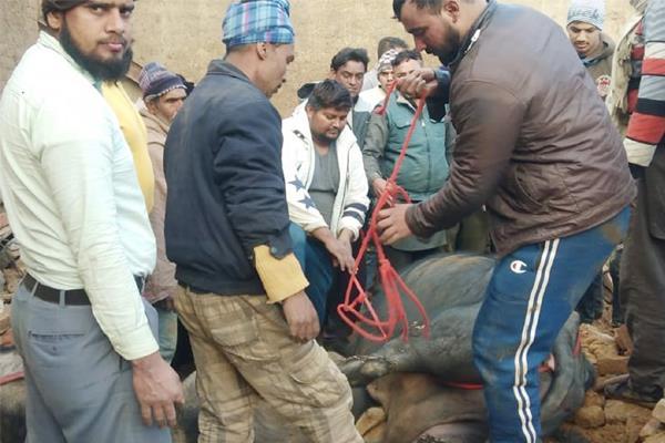 dropped shad of dairy farm 3 dozen milch animals buried under debris