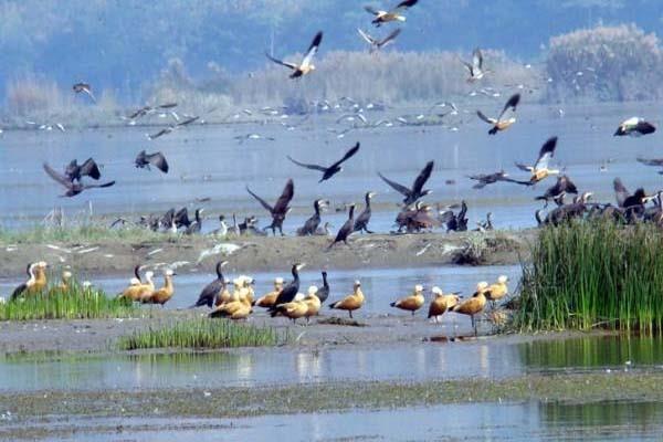 6 wetland of punjab got title of international wetland