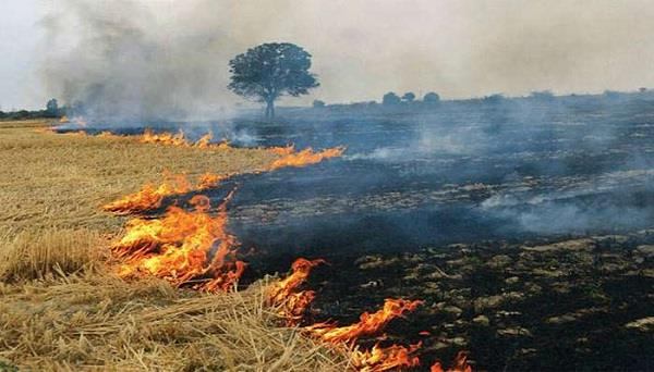 most parali burning districts in the state will be reviewed