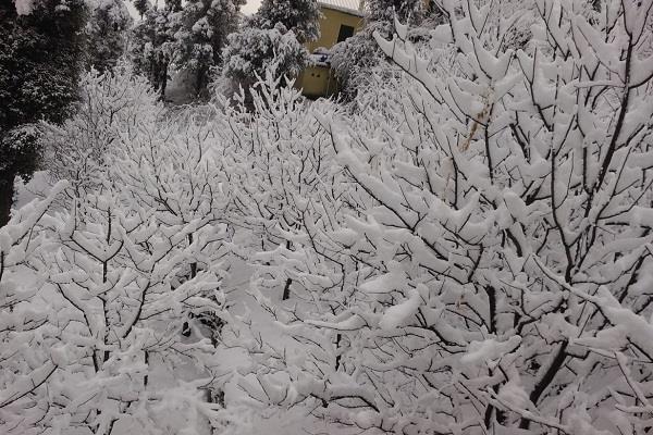 heavy snowfall in high altitude areas of sundernagar