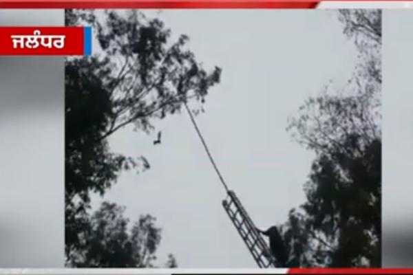 PunjabKesari, free the trapped bird in china dor