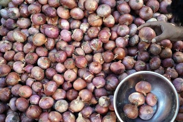 7 thousand tons of foreign onion rot due to falling prices