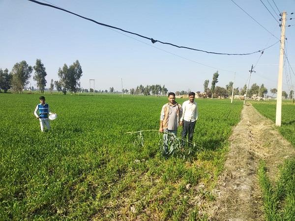 locust team attacked in jalalabad village