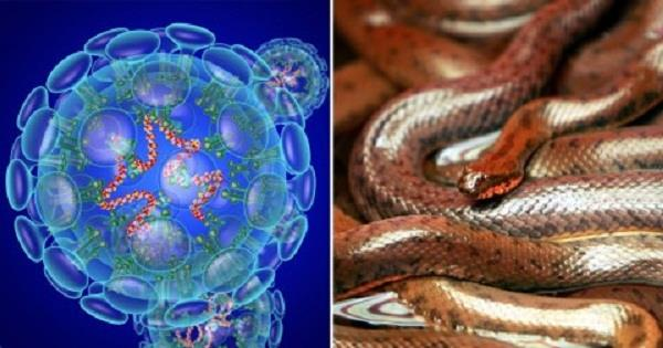 snakes and bats could be the original source of the new corona virus