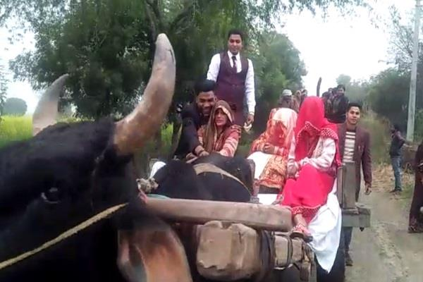 bad road conditions in yogiraj groom forced to take bride on bullock cart
