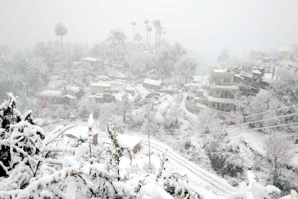 snowfall in solan and chayal