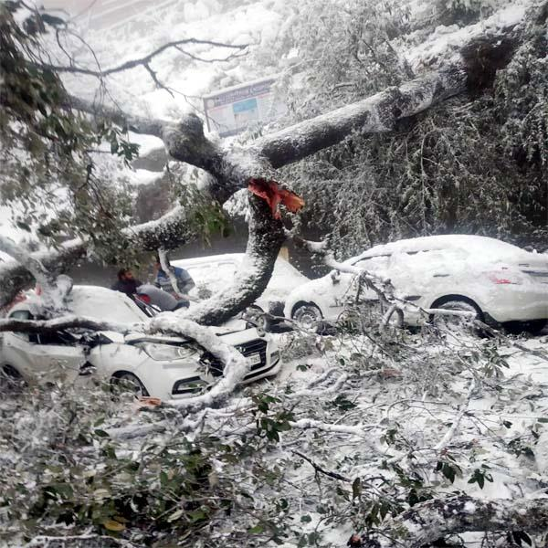 tree fell on the car selfie saved the life of passengers