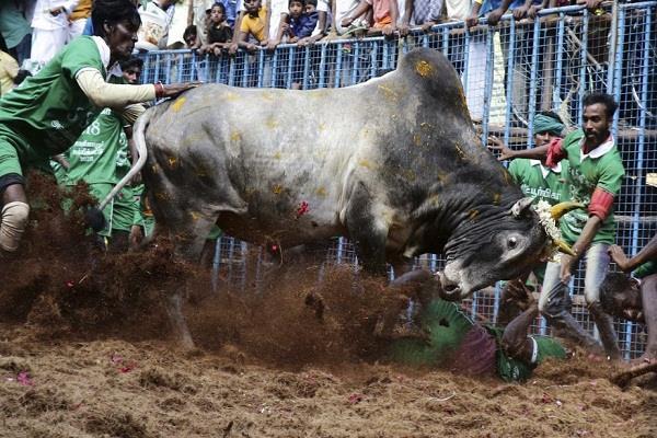 two viewers died during jallikattu in tamil nadu
