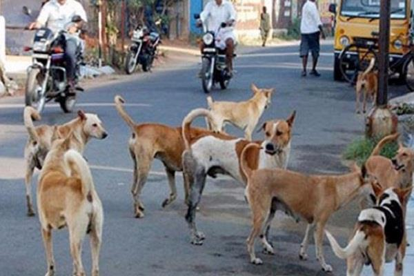 the atmosphere of fear among dogs is increasing in the country