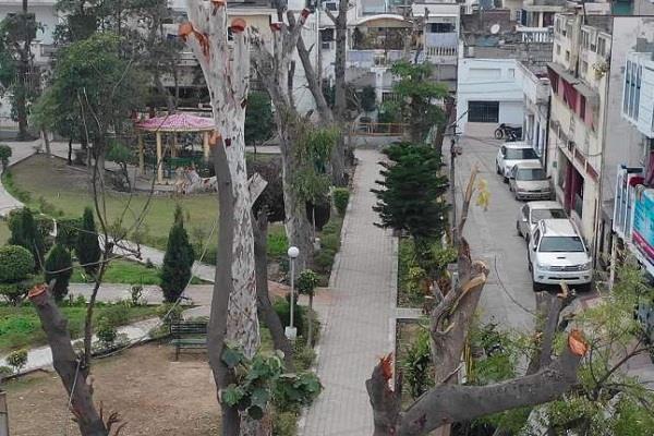 environmental enemies slaughtered 100 trees