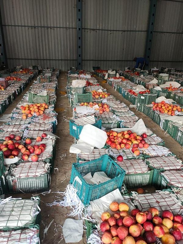afghanistan starts sending apples in transplant boxes 4 trucks on attari border