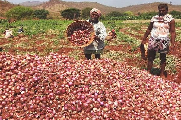 farmers are making the onion cry