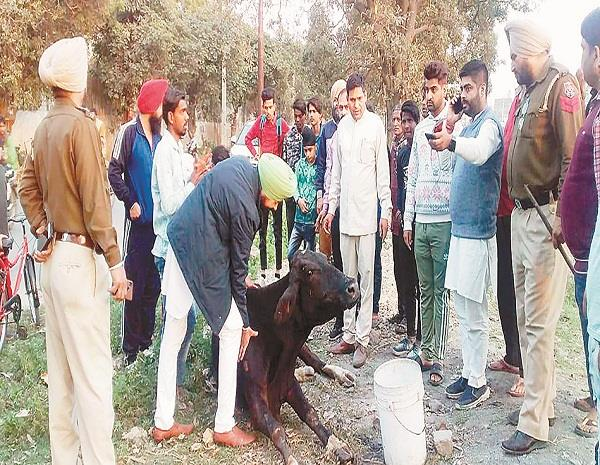 protest by cow devotee