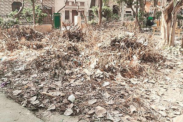 dogs made shelters in arjun nagar park