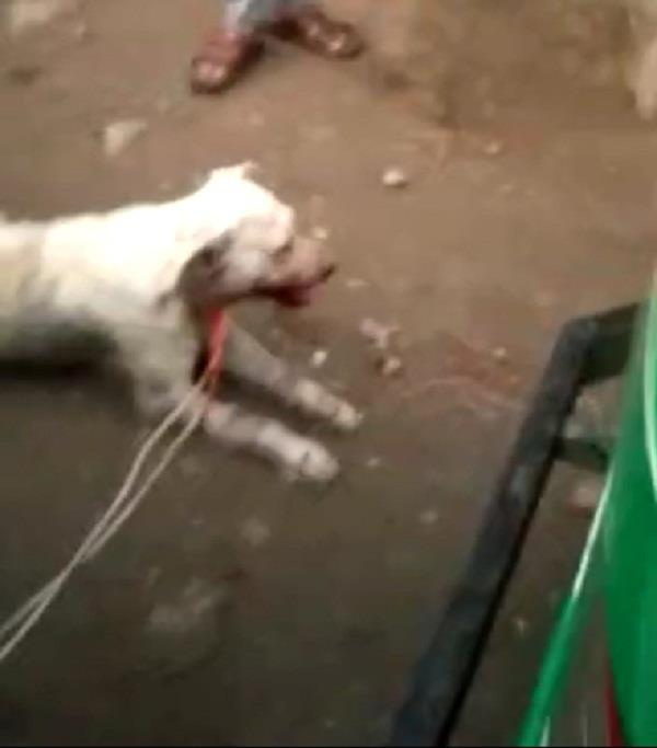 dog was beaten with poles and then thrown down the roof