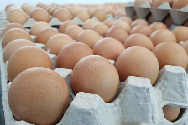 egg and chicken became cheaper prices fell by up to 30