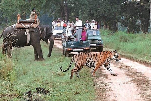 dudhwa park tiger sighting increased due to changing weather