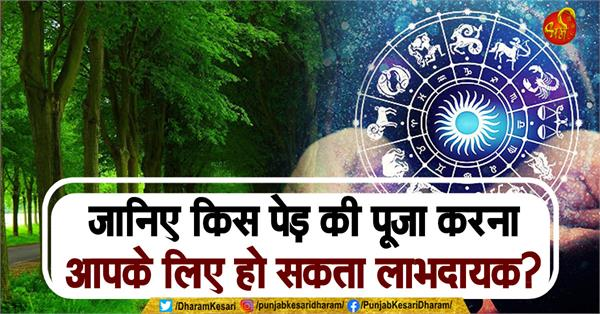 know which tree worship can be beneficial for you