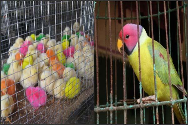 birds sold for rs 600 after rigor