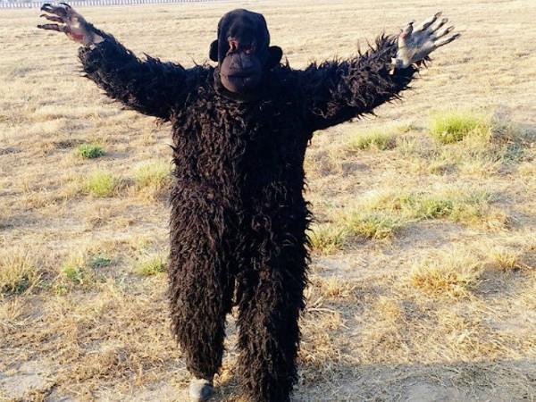 bear posted at ahmedabad airport to drive langurs