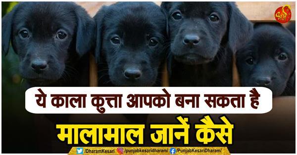 according astrology is black dog good for shani or rahu dosh nivaran