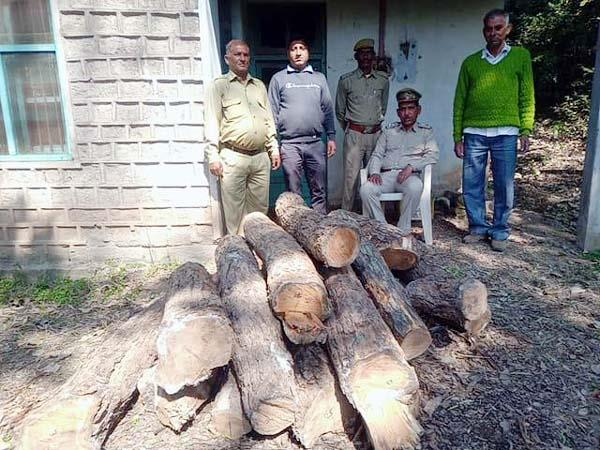 trees cut down from forest land