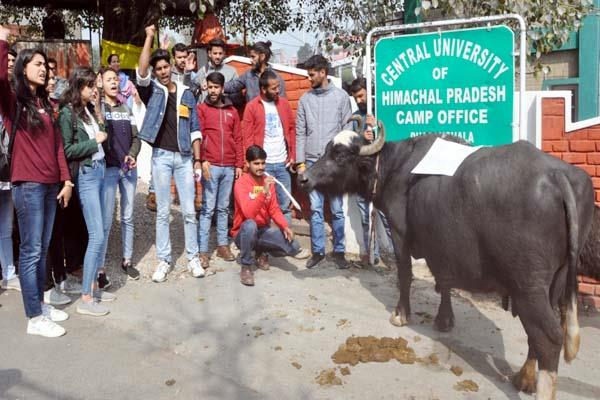 abvp protest in kangra