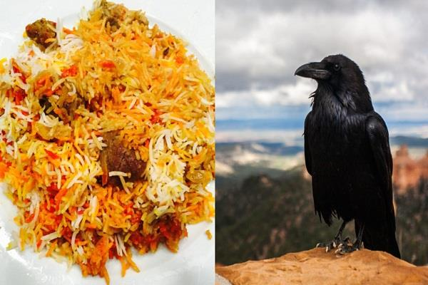 crow biryani was selling in the name of chicken