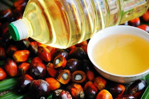 oil oilseed prices fall