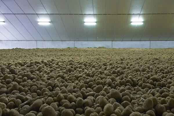 potato became expensive by 15 due to low yield high storage