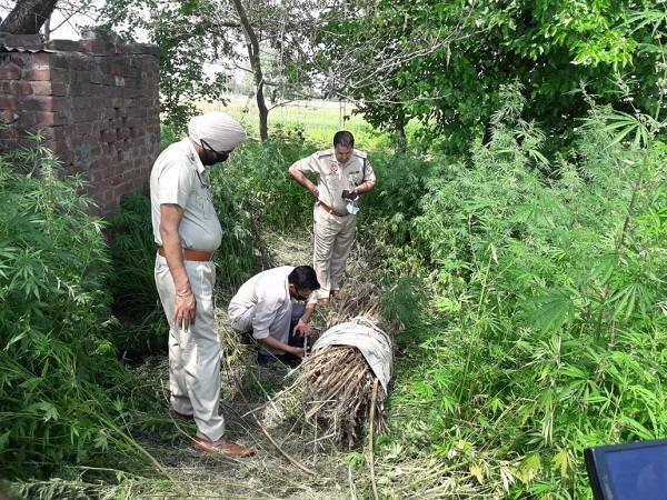 woman s body found half dead in village nijjaran s farm
