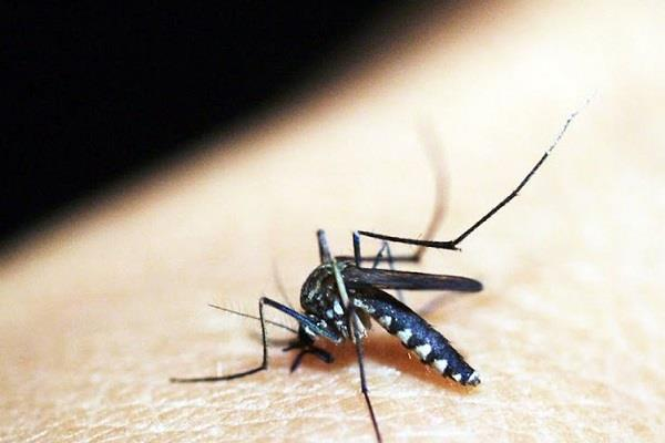 mosquitoes thrive in rain water fear of increasing diseases