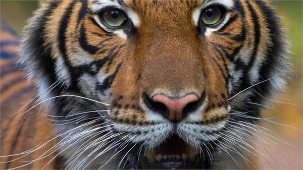 क्या अब जानवरों की तरफ बढ़ रहा Covid-19? जारी की गई एडवाइजरी