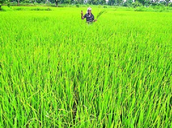 contact number released for convenience of farmers